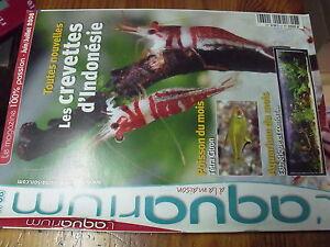 Revue-Aquarium-a-la-maison-n-68-Crevettes-Indonesie-Tetra-Filtre-Lagunaire