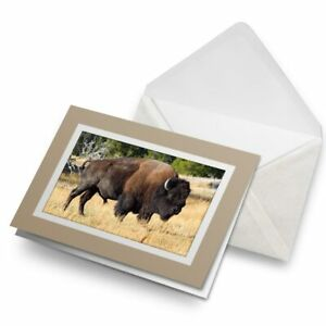 Greetings-Card-Biege-Bison-Yellowstone-National-Park-21226