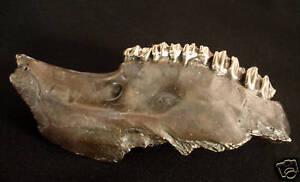Bronze-Lost-Wax-Cast-034-Animal-Jaw-Bone-034-Decorative-Sculpture-Fine-Art