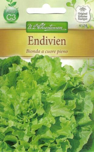 /& Herbstanbau  Samen 4174 Chrestensen Endivien /'Bionda a cuore pieno/' Sommer