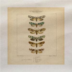 Moths butterflies botanical  Panel Make A Cushion Upholstery Craft