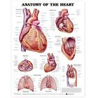 Anatomy of the Heart Anatomical Chart by Anatomical Chart Co. (Fold-out book or chart, 2001)