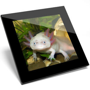 Axolotl Coaster
