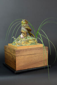 Rare-Automate-cage-oiseau-chanteur-Boite-a-Musique-art-deco-bakelite-Curiosite