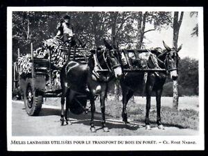 1948 -- MULES LANDAISES UTILISEES POUR LE TTRANSPORT DU BOIS EN FORET 3N124 - France - 1948 -- MULES LANDAISES UTILISEES POUR LE TTRANSPORT DU BOIS EN FORET 3N124 il ne s'agit pas d'une Carte Postale mais d'un document GARANTI D'EPOQUE présenté sur carton d'encadrement Année de parution : 1948 format : 80 X 110 mm Paiements acce - France