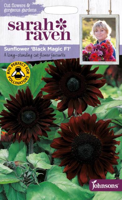 SEEDS JOHNSONS SARAH RAVENS  FLOWER SCABIOUS BLACK KNIGHT SEED