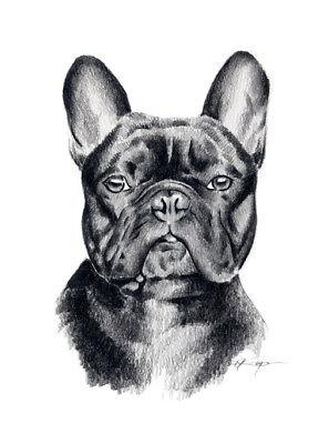 FRENCH BULLDOG Pencil DOG Drawing 8 x 10 Art Print by Artist DJR