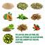 Super-Colon-Cleanse-Caps-240-w-Herbs-amp-Acidops-by-Health-Plus-Inc thumbnail 4