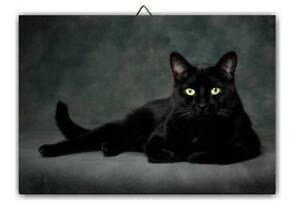 Tableau chat noir 5 s l300