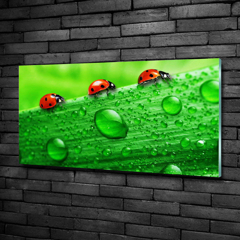 Acrylglas-Bild Wandbilder Druck 100x50 Deko Tiere Marienkäfer Rasen