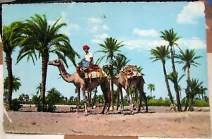 Aden-camels-passing-through-palm-trees-Laheg-posted-1963