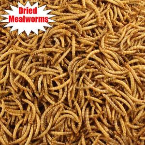 Lot Bulk Dried Mealworms for Wild Birds Food Blue Bird Chickens Hen Treats Food