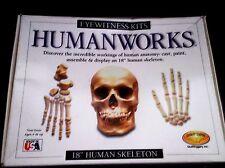 "HUMANWORKS 18"" HUMAN SKELETON MODEL KIT in ORIGINAL BOX, CAST, PAINT, & ASSEMBLE"