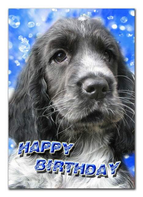 c117; Large Personalised Birthday card; Custom made for any name; Cocker spaniel
