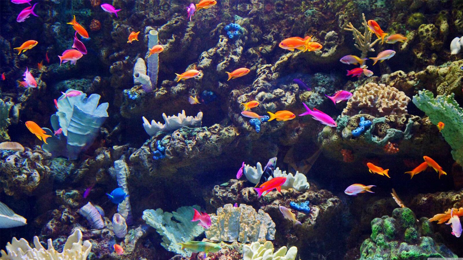 3D Fonds Marins Poisson 233 Décor Mural Murale De Mur Mur Mur De Cuisine AJ WALLPAPER FR | De Fin D'année Bonnes Affaires Vente  567dbe