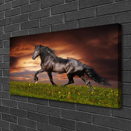 Leinwand-Bilder 100x50 Wandbild Canvas Kunstdruck Schwarzes Pferd Wiese Tiere