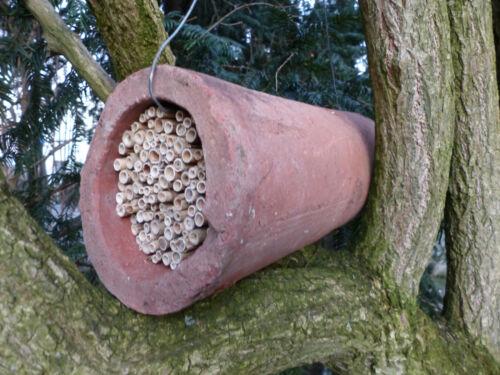 Nisthilfen Tonröhre Schilfrohre Bruthülsen Niströhren Wildbienen Insektenhotel