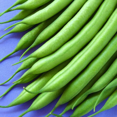 500 Seeds CLIMBING FRENCH BEAN BLUE LAKE ..ideal for early protected crops