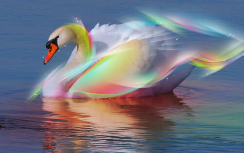Rainbow Swan Vinyl Checkbook cover