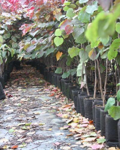 5 Root Pouch rouge Géotextile Smart grow Pot déco jardin 18L