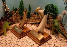 RAPTOR CLAW T-REX TOOTH MUSEUM QUALITY REPLICA w/STAND