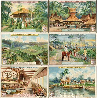 Adattabile Chromo Liebig Sang. 715 Ita Coltivazione Del Tabacco A Sumatra Anno 1902 Firm In Structure