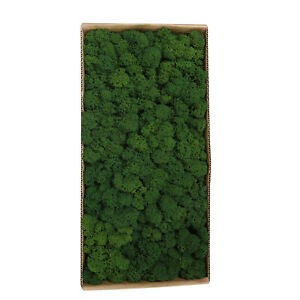 Preserved Moss Wall Decor Real Preserved Moss No Maintenance Required Z9E9_GG