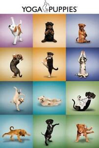 Yoga-Puppies-Maxi-Poster-61cm-x-91-5cm-new-and-sealed