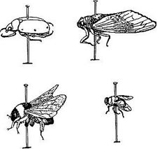 Insects Their World and Their History Entomology ebooks on CD