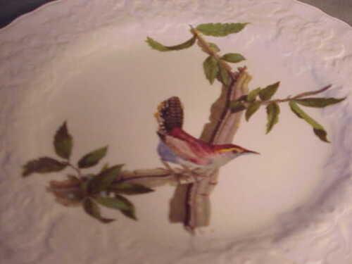 ENGLISH ALFRED MEAKIN BIRDS OF AMERICA  LUNCHEON PLATE #18 BESWICK/'S WREN