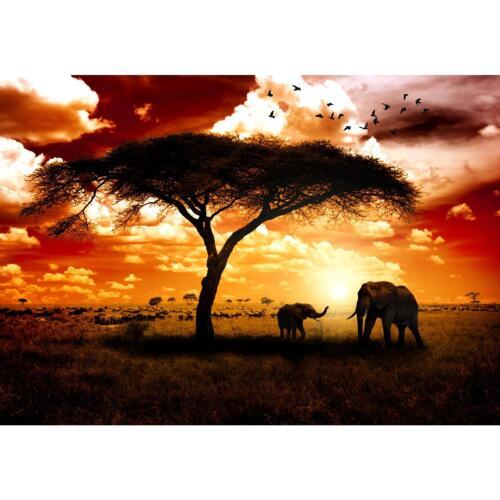 Vlies Fototapete Afrika Wandtapete Tapete Wandbilder XXL Dekoration Runa 9110aP