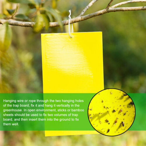 10//20 PC Dual-Sided Yellow Sticky Traps for Flying Plant Insect Like Fungus Gnat