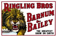 Ringling Bros. Circus Lion Poster Large 24inx36in