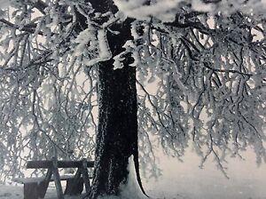 FEENSCHLEIER-Schneebedeckte-Aste-und-Bank-im-Winter-Fotogravur-um-1920