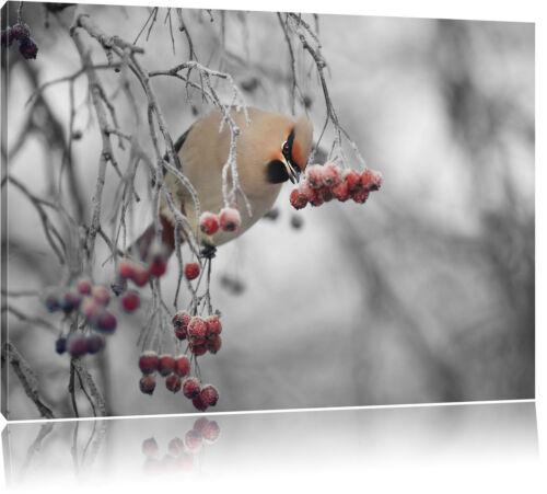 Kleiner Vogel im Vogelbeerbaum  Leinwandbild Wanddeko Kunstdruck