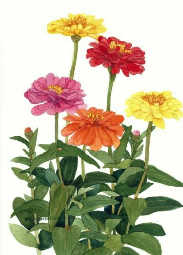 Zinnia Floral  Note Cards Set of 30 assort 5 x 7 Blank Watercolor Reproductions