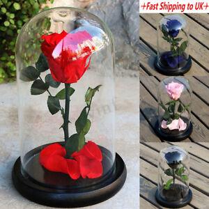 Forever Rose Flower Festive Preserved Immortal Fresh Rose In Glass