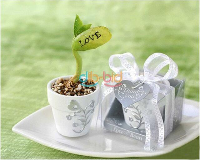 10/20/50 Magic White Bean Seeds Gift Plant Growing Message Word Love Office KZ