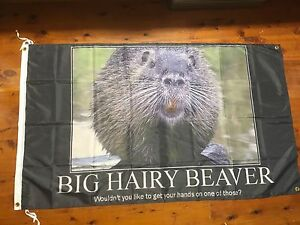 Hairy beaver photos