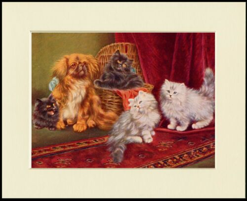 PEKINGESE AND CATS LOVELY LITTLE DOG PRINT MOUNTED READY TO FRAME