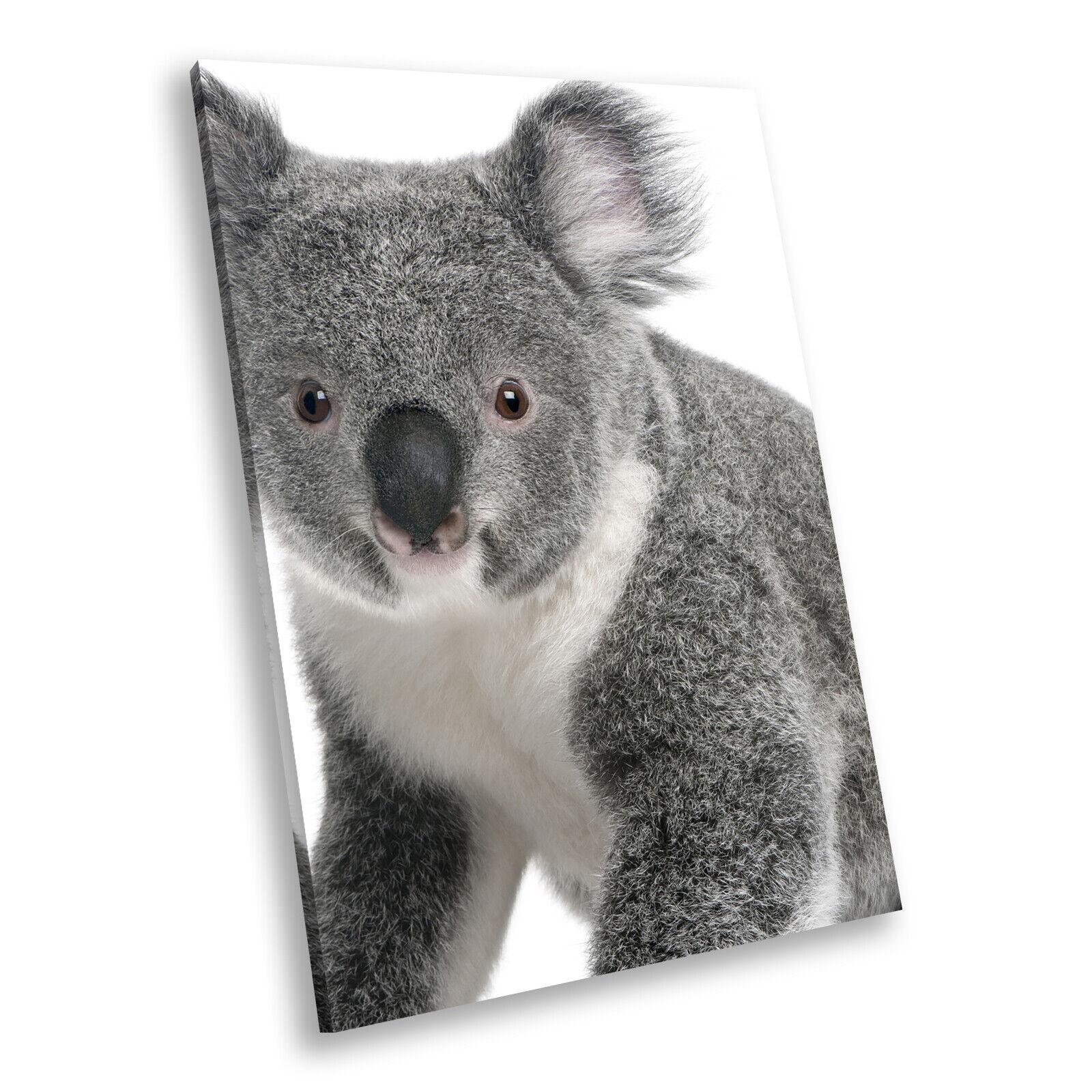 grau Koala Bear Weiß  Portrait Animal Canvas Framed Art Large Picture