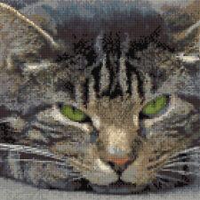 "Grey Tabby Cat Facial Portrait - Cross Stitch Full Kit 10"" x 10"" - 14 Count Aida"