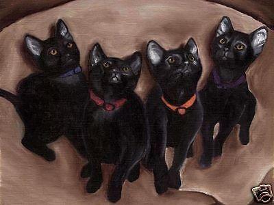 BIG 13x19 RAGDOLL CAT Art PRINT of Painting by VERN