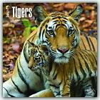 Tigers 2017 Square by Inc BrownTrout Publishers 9781465081759 Calendar 2016