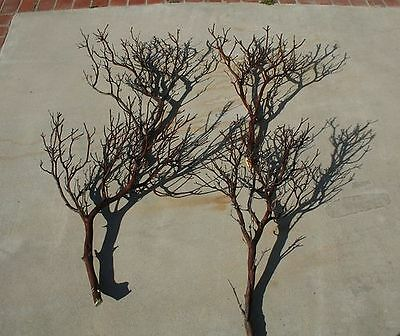 "10 FULL 18"" Manzanita Branches / for centerpieces or wishing trees for wedding"