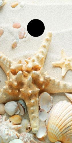 Cornhole Board Bag Toss wrap SINGLE BEACH SHELLS VINYL DECAL STARFISH