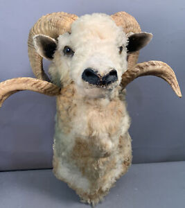 LG Vintage HUNTING CABIN Lodge Decor RAMS Sheep HEAD Old TAXIDERMY Wall MOUNT
