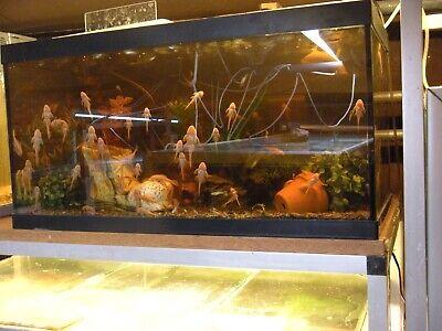 akvariefisk maribo