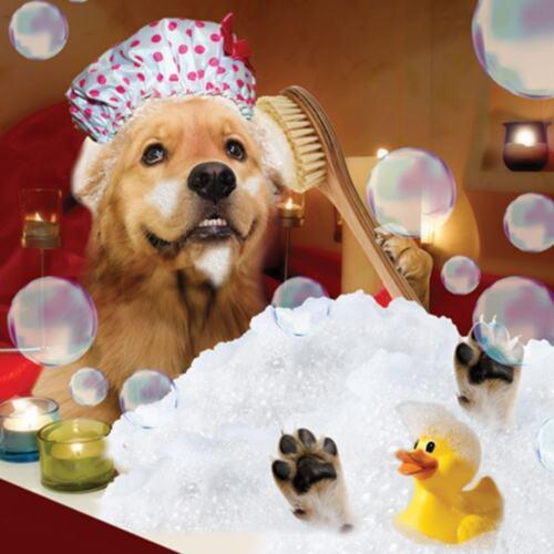 GOLDEN LABRADOR retriever à Bath mignon d/'Anniversaire Carte De Vœux Chien Amoureux