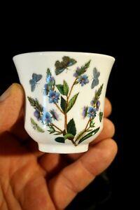 Beautiful-Portmeirion-Botanic-Garden-Speedwell-Small-Pot